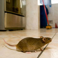 pest-solution-in-bhubaneswar
